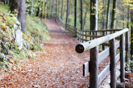 railing in forest